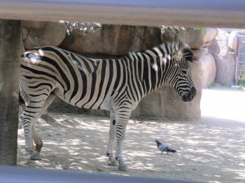 王子動物園62.jpg