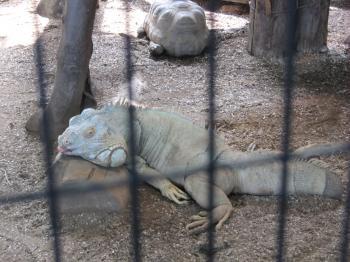 王子動物園68.jpg