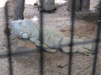 王子動物園67.jpg