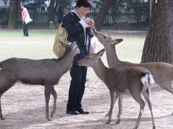 奈良公園1.jpg