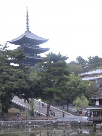 奈良公園9.jpg