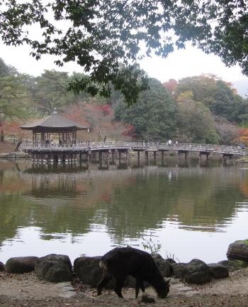 奈良公園11.jpg