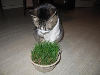 猫草5.jpg