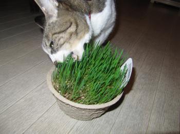 猫草4.jpg