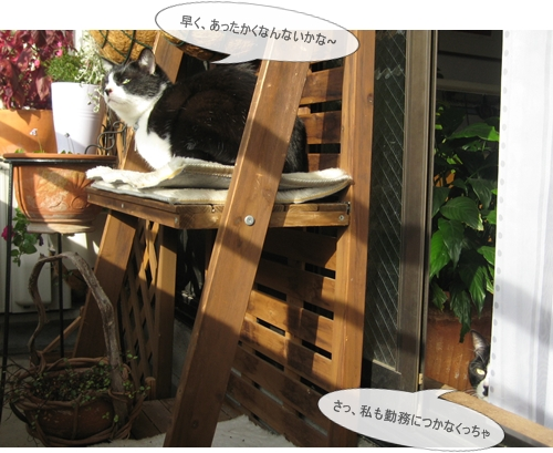 3IMG_9442.jpg