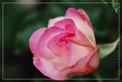 11_20110512103613.jpg
