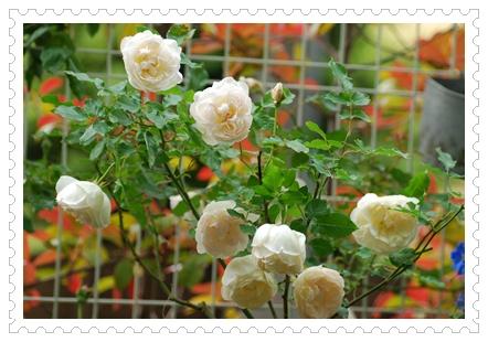 12_20110510171429.jpg
