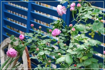 7_20110509103837.jpg