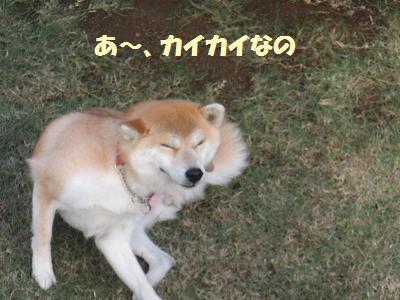 CIMG0321.jpg
