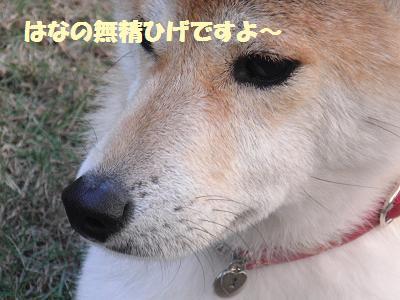 CIMG0328.jpg
