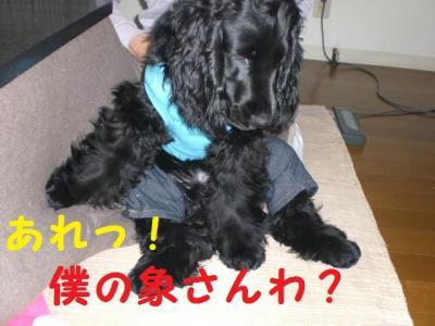 11302_convert_20091130214507.jpg
