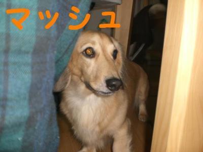 12151_convert_20091215211712.jpg