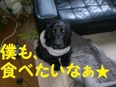 繝峨・繝翫ヤ3_convert_20091128112405
