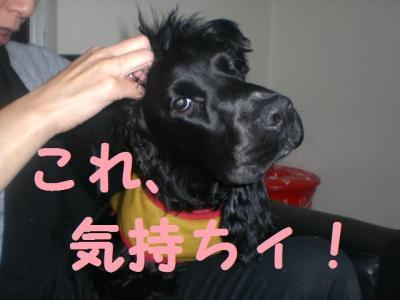 閠ウ縺九″2_convert_20091209213023