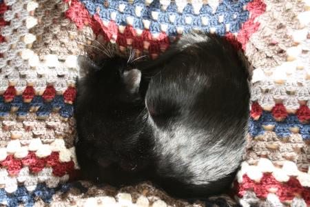 カワウソ的猫