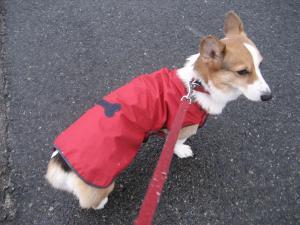 真っ赤なレインコート
