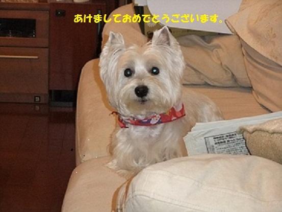 009_20110105153932.jpg