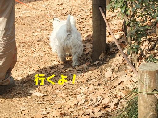 018_20110123223137.jpg