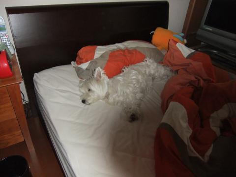 bed+001_convert_20100624103255.jpg