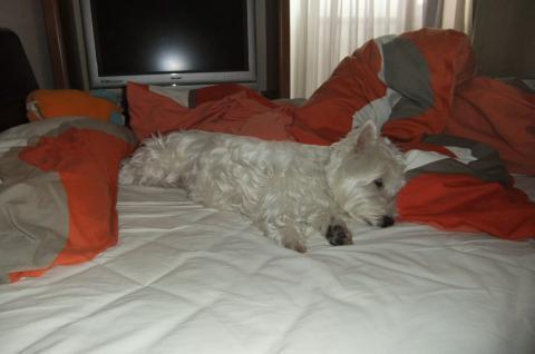 bed+002_convert_20100624103330.jpg
