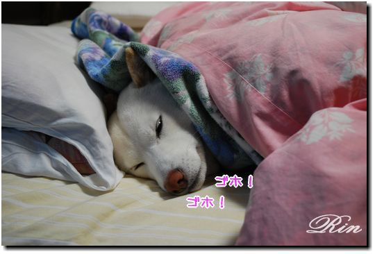 風邪ひいて寝込んでます。。。