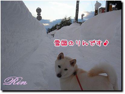 雪国のりんちゃん♪