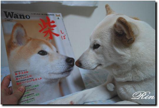 雑誌『Wan』