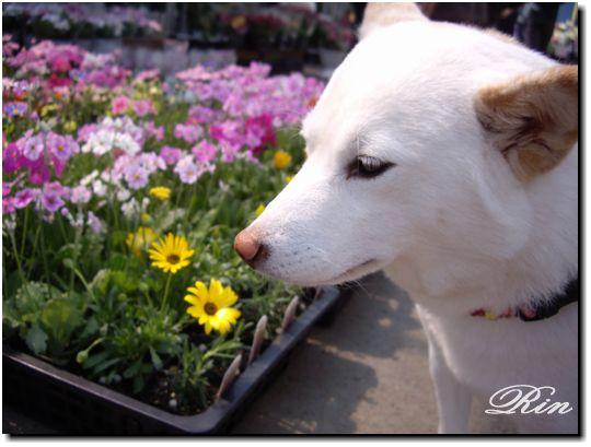可愛いお花と♪