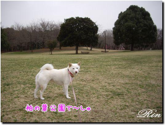 柏の葉公園で~しゅ