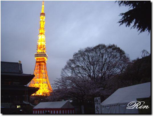 夜は増上寺の桜~
