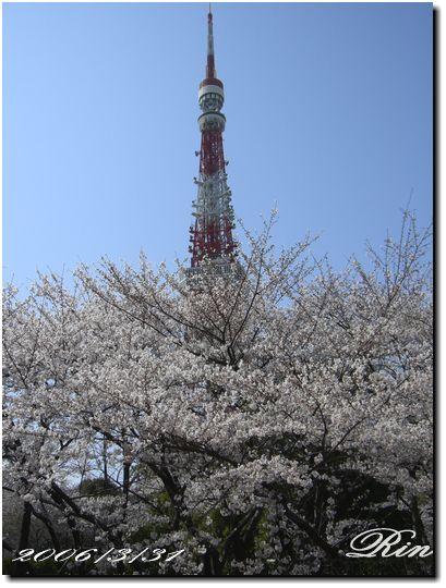 2006年3月の桜♪
