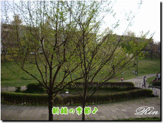 新緑の季節♪