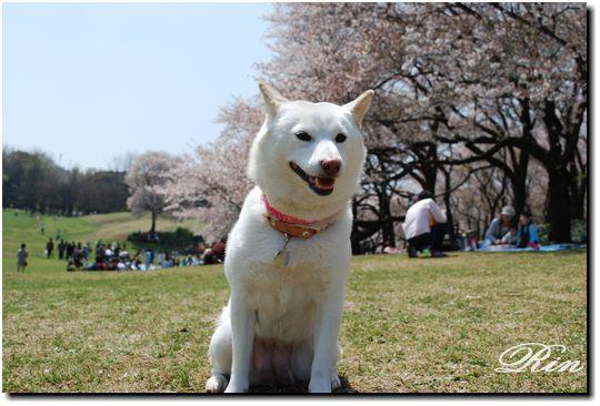 桜の前でパシャ☆