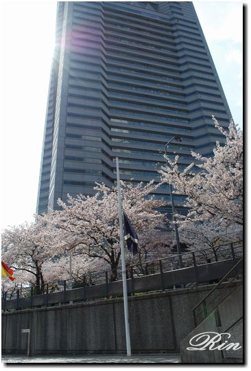 ランドマークタワーと桜
