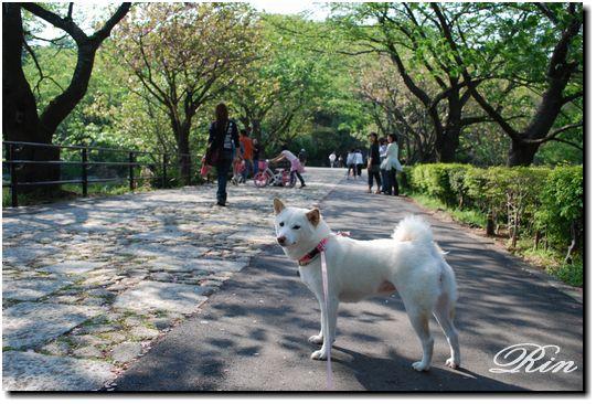 桜並木の通り