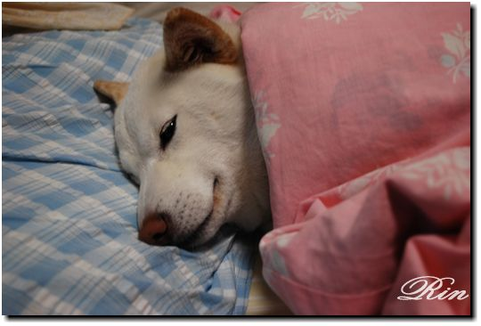 おやすみ^^