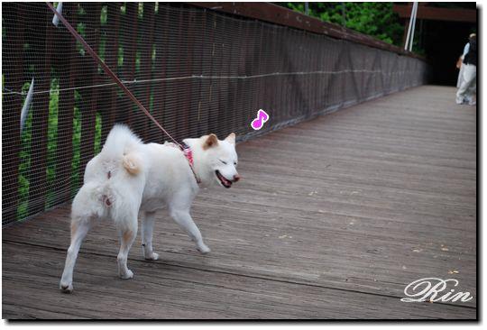 橋を渡ってまーす