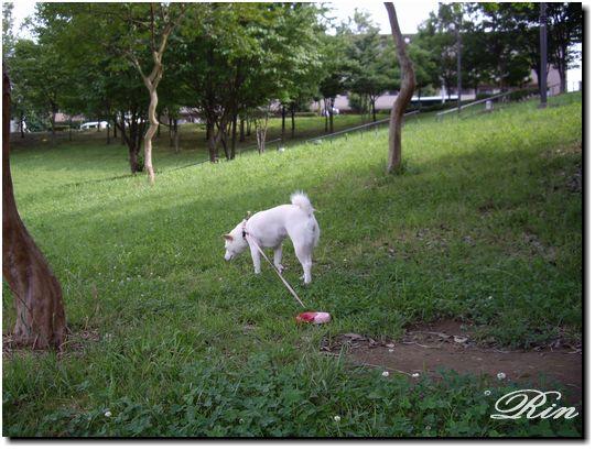 公園にお散歩~