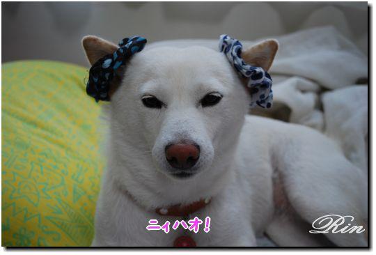 チャイニーズ犬のリンリンでしゅ♪