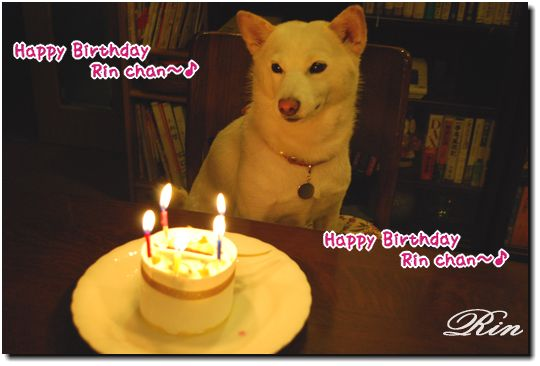 Happy Birthday Dear Rin chan~♪