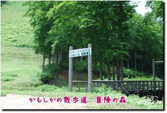 かもしかの散歩道 冒険の森