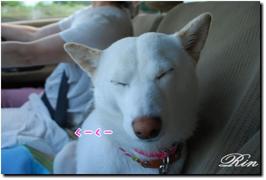 凛ちゃん、お疲れ!