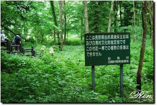 姫川源流と親海湿原