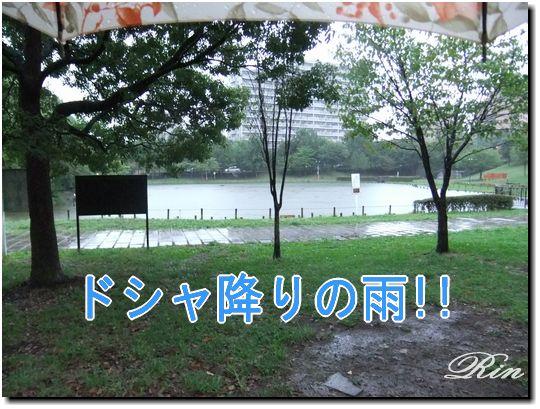 ドシャ降りの雨!!