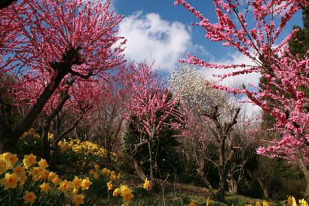 松川町の花山
