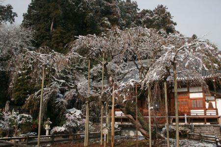 太山寺の雪景色