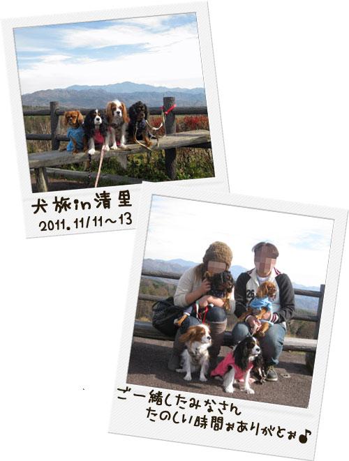 1113a_20111119021337.jpg