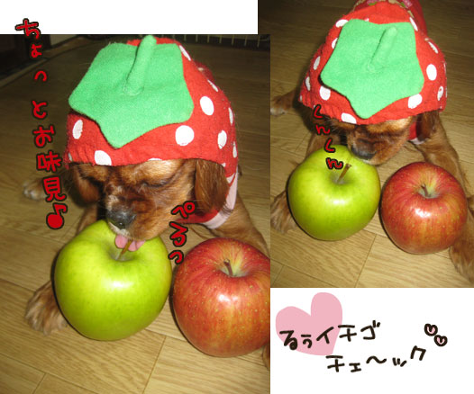 1209c_20111210001612.jpg