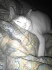 猫の狸寝入り