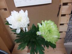 菊 ロサーナ&ゼンブラライム